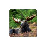 Majestic Moose Magnet (Square)