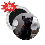 French Bulldog 2.25  Button Magnet (10 pack)