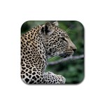 Leopard 2 Rubber Square Coaster (4 pack)