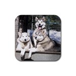 Huskies Rubber Square Coaster (4 pack)