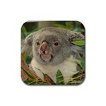 Koala Bear Rubber Square Coaster (4 pack)