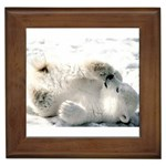 Baby Polar Bear Framed Tile