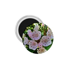 Amazing Garden Flowers 35 1 75  Magnets