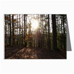 Sunset in the Woods - Leonard Harris State Park - Pennsylvania Grand Canyon - Ave Hurley - Greeting Cards (Pkg of 8)
