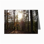 Sunset in the Woods - Leonard Harris State Park - Pennsylvania Grand Canyon - Ave Hurley -  Mini Greeting Cards (Pkg of 8)