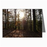 Sunset in the Woods - Leonard Harris State Park - Pennsylvania Grand Canyon - Ave Hurley - Greeting Card