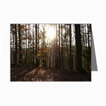 Sunset in the Woods - Leonard Harris State Park - Pennsylvania Grand Canyon - Ave Hurley - Mini Greeting Card