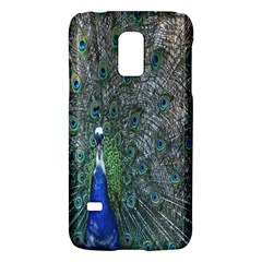 Peacock Four Spot Feather Bird Galaxy S5 Mini by Nexatart