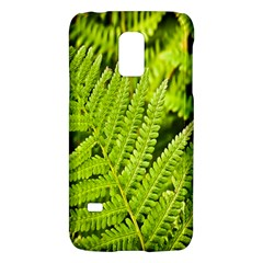 Fern Nature Green Plant Galaxy S5 Mini by Nexatart