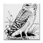 Animal Bird Forest Nature Owl Tile Coasters