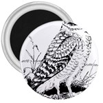 Animal Bird Forest Nature Owl 3  Magnets