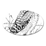 Animal Bird Forest Nature Owl Oval Magnet