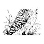 Animal Bird Forest Nature Owl Plate Mats