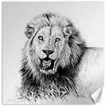 Lion Wildlife Art And Illustration Pencil Canvas 20  x 20