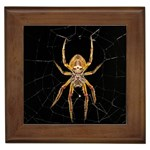 Insect Macro Spider Colombia Framed Tiles
