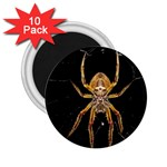 Insect Macro Spider Colombia 2.25  Magnets (10 pack)