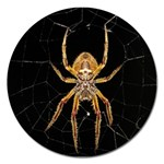 Insect Macro Spider Colombia Magnet 5  (Round)