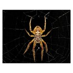 Insect Macro Spider Colombia Rectangular Jigsaw Puzzl