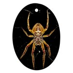 Insect Macro Spider Colombia Oval Ornament (Two Sides)