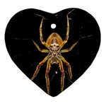 Insect Macro Spider Colombia Heart Ornament (Two Sides)