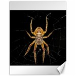 Insect Macro Spider Colombia Canvas 12  x 16