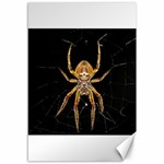 Insect Macro Spider Colombia Canvas 12  x 18