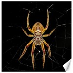 Insect Macro Spider Colombia Canvas 16  x 16