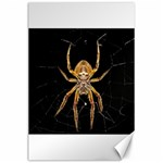 Insect Macro Spider Colombia Canvas 24  x 36
