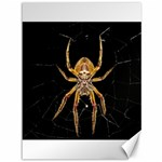 Insect Macro Spider Colombia Canvas 36  x 48