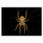 Insect Macro Spider Colombia Large Glasses Cloth