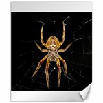 Insect Macro Spider Colombia Canvas 11  x 14
