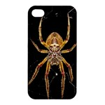 Insect Macro Spider Colombia Apple iPhone 4/4S Hardshell Case