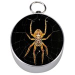 Insect Macro Spider Colombia Silver Compasses