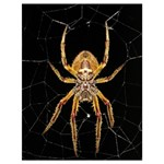 Insect Macro Spider Colombia Drawstring Bag (Large)
