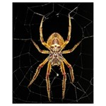 Insect Macro Spider Colombia Drawstring Bag (Small)