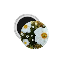 Summer Anemone Sylvestris 1 75  Magnets by Nexatart