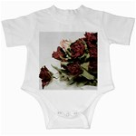 Roses 1802790 960 720 Infant Creepers