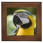 Handsome Parrot Framed Tile