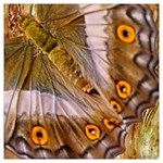 Collection: Metamorpha<br>Print Designs: Sun and Moon Moth<br>Style: Square Chiffon Scarf (50 x50 )