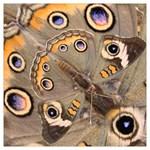 Collection: Metamorpha <br>Print Design: Dawn Moth<br>Style: Square Chiffon Scarf 50x50