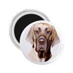 Great Dane ^ 2.25  Magnet