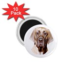Great Dane ^ 1.75  Magnet (10 pack)