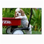 Cocker Spaniel ^ Postcard 4 x 6  (Pkg of 10)
