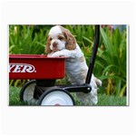 Cocker Spaniel ^ Postcards 5  x 7  (Pkg of 10)