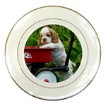 Cocker Spaniel ^ Porcelain Plate