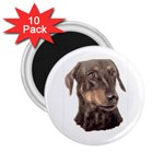 Dobermann Pinscher ^ 2.25  Magnet (10 pack)