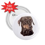 Dobermann Pinscher ^ 2.25  Button (100 pack)