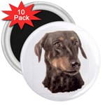 Dobermann Pinscher ^ 3  Magnet (10 pack)