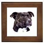 Staffie Black ^ Framed Tile