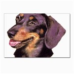Dachshund Wiener Dog ^ Postcards 5  x 7  (Pkg of 10)